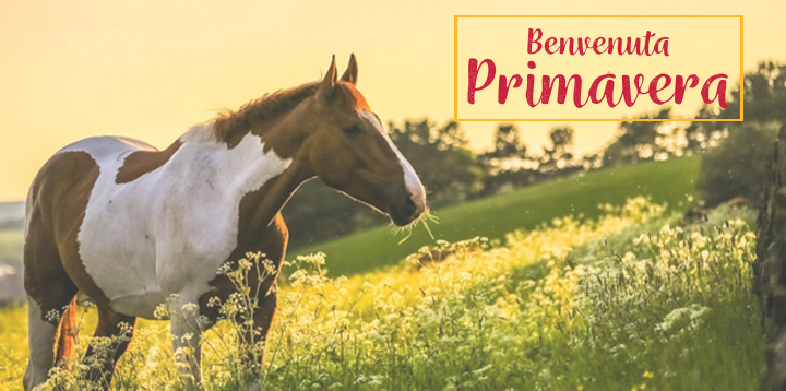 e4d566a023 Equestrian Roma - Vendita Articoli Equitazione Roma